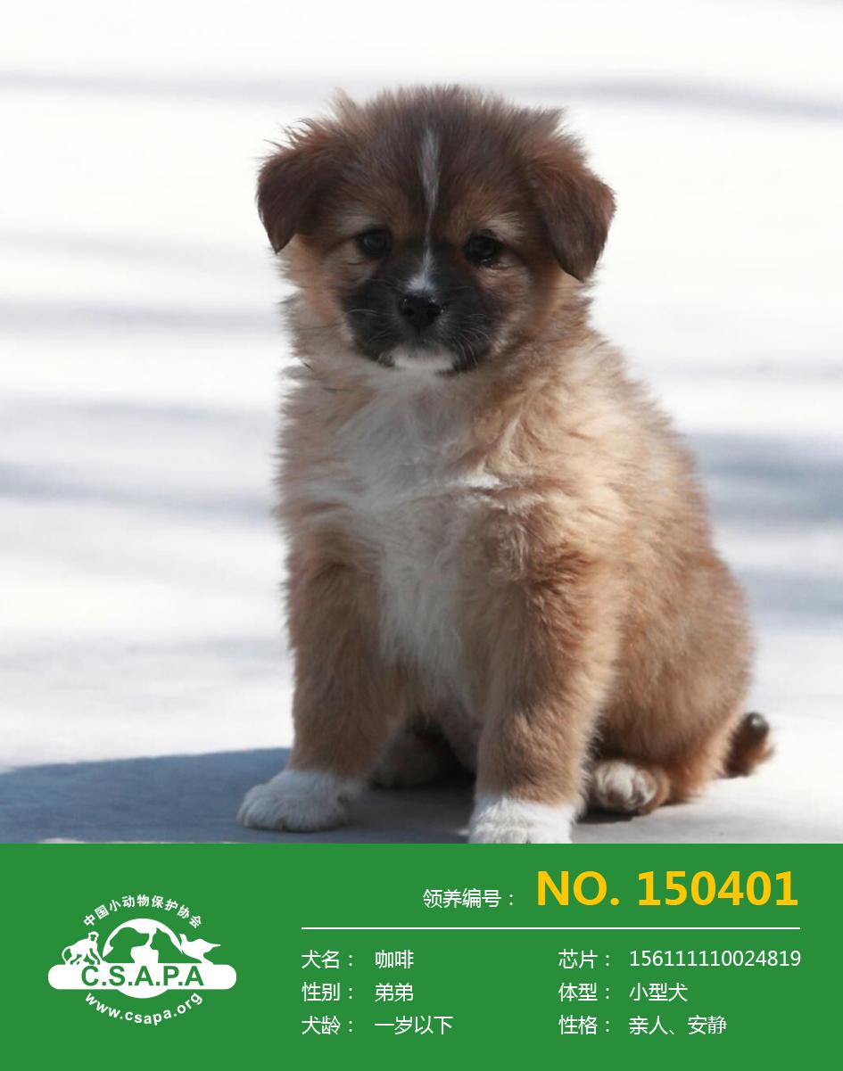 回家---中国小动物保护协会流浪动物保护基地犬