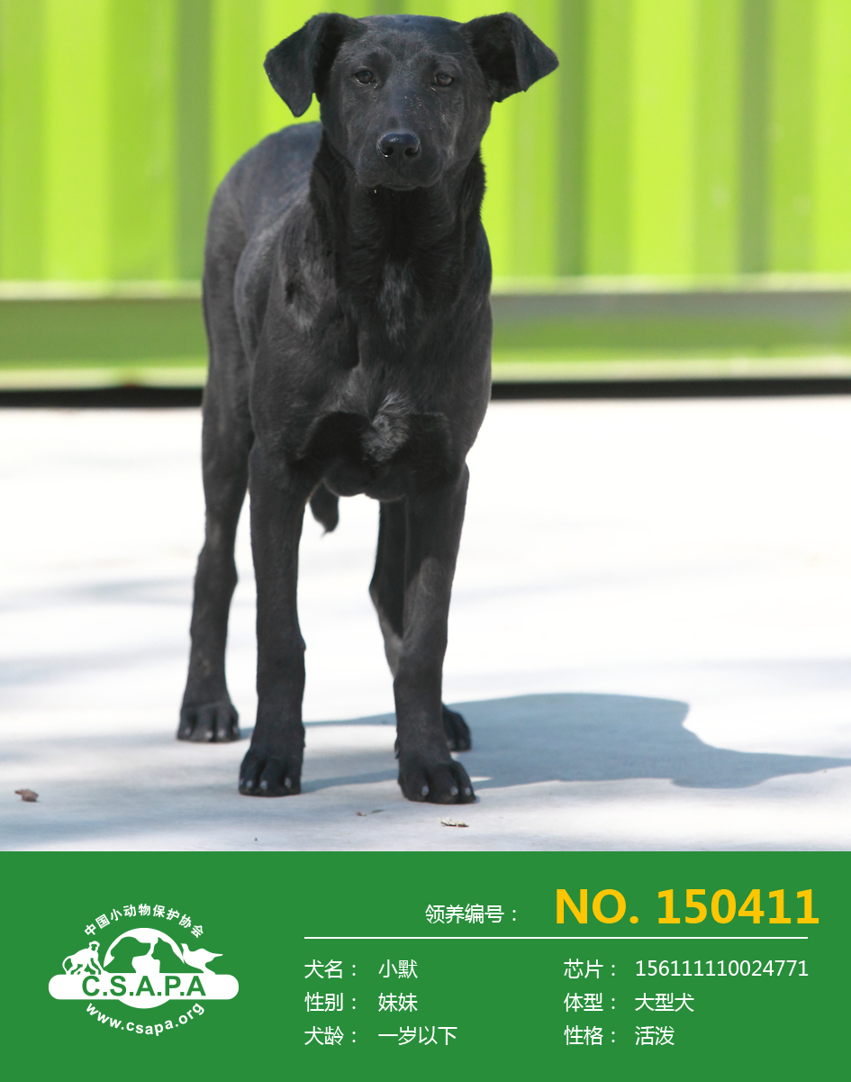 爱· 回家---中国小动物保护协会流浪动物保护基地流浪犬开放领养