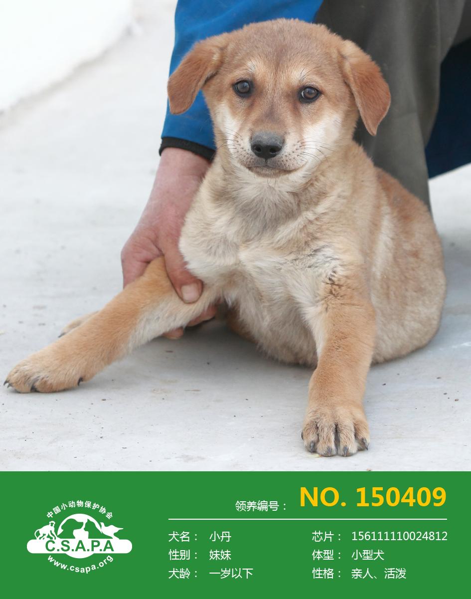 中国小动物保护协会